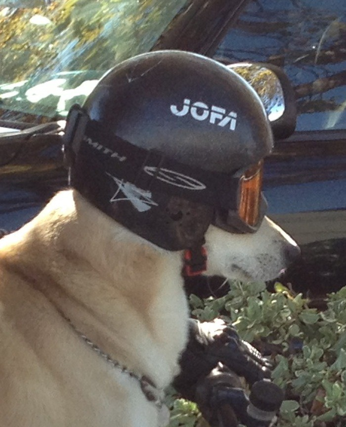 Dog Spotted Riding Motorcycle, Wearing Helmet: A Detailed ...