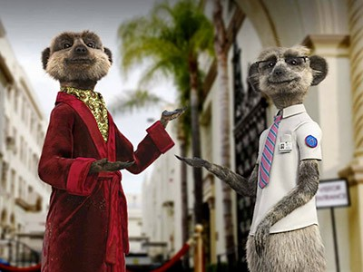 Image for compare the meerkat
