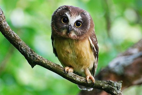 There is nothing creepier than a featherless owl one for What owls look like without feathers