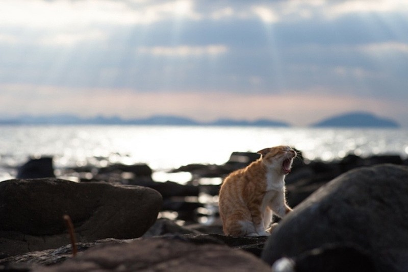 Sunset and a cat