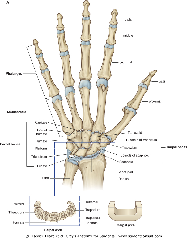 Neuromation Research Pediatric Bone Age Assessment With