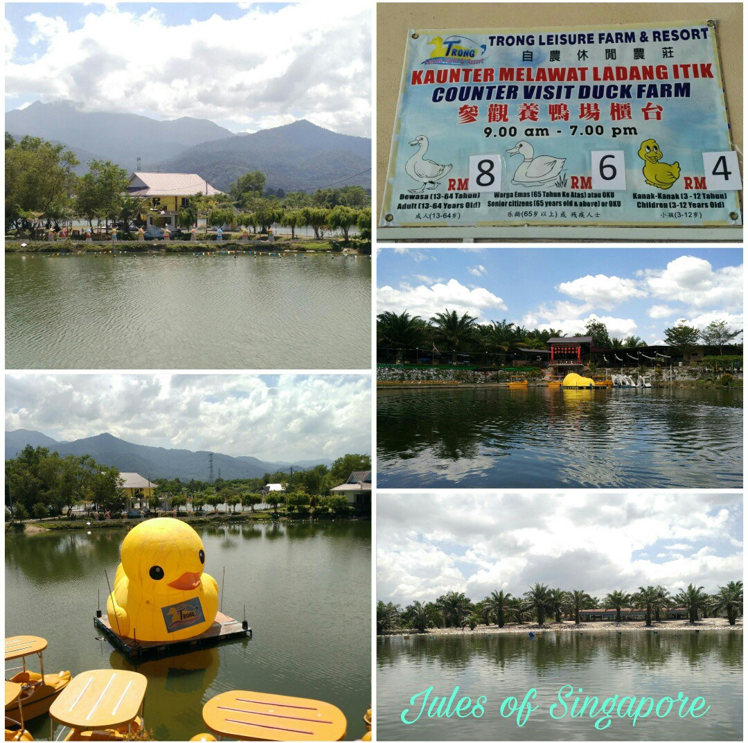 Trong Leisure duck farm