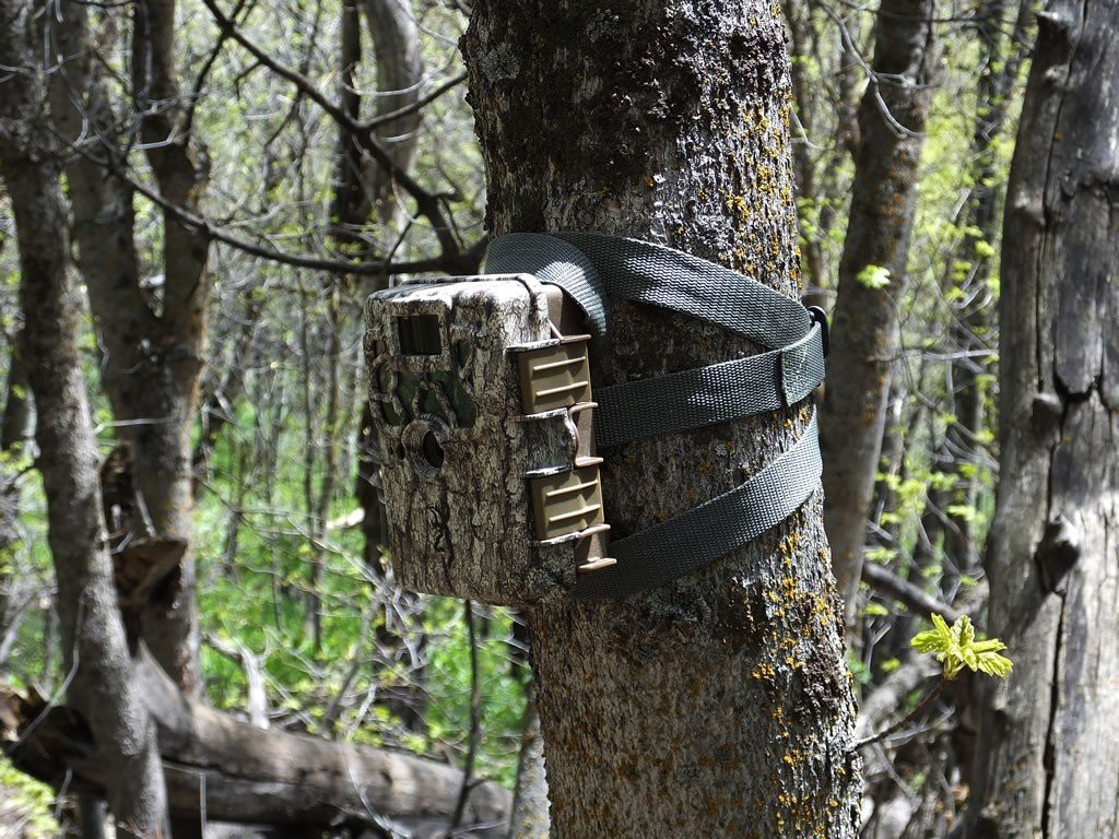 Have the trail camera blend in