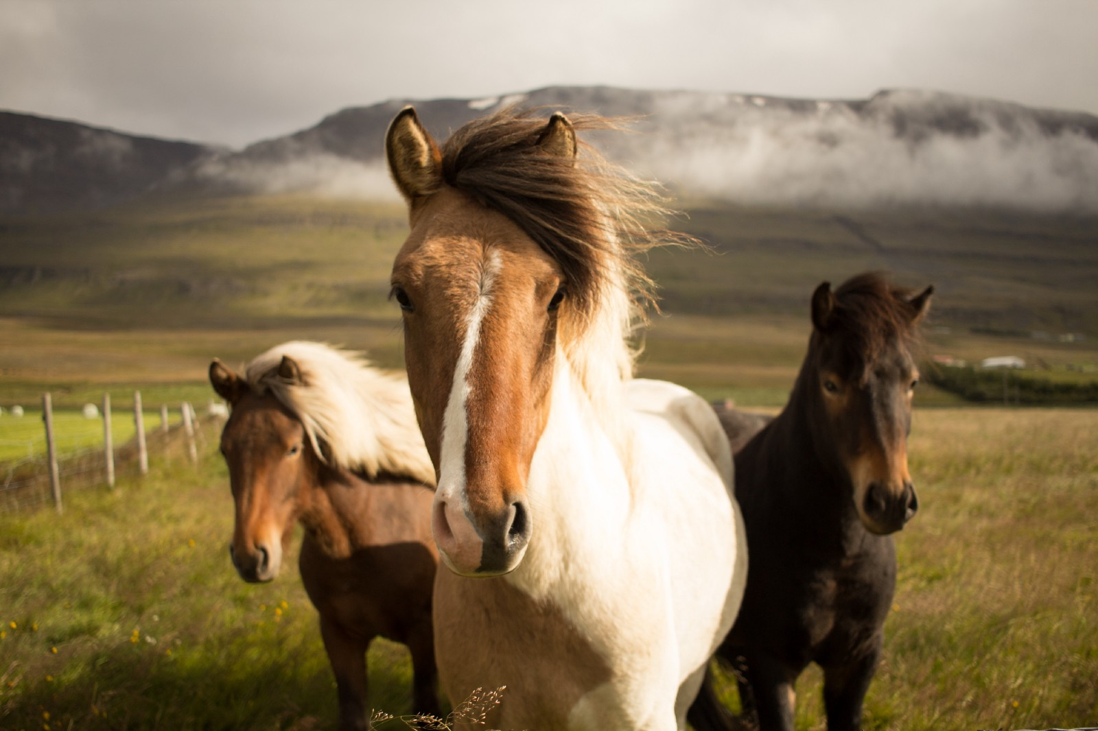 The Horse and two friends in the mist