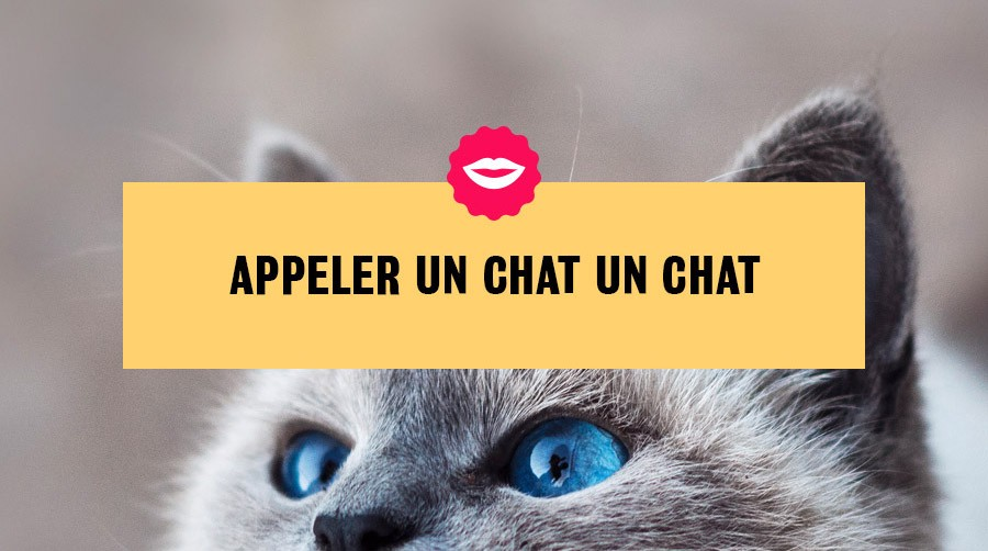 2-french-saying-un-chat