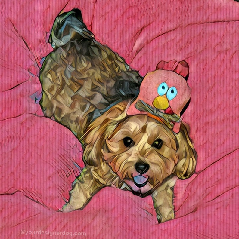 dogs. designer dogs, Yorkipoo, yorkie poo, digital art, pet portrait, chicken