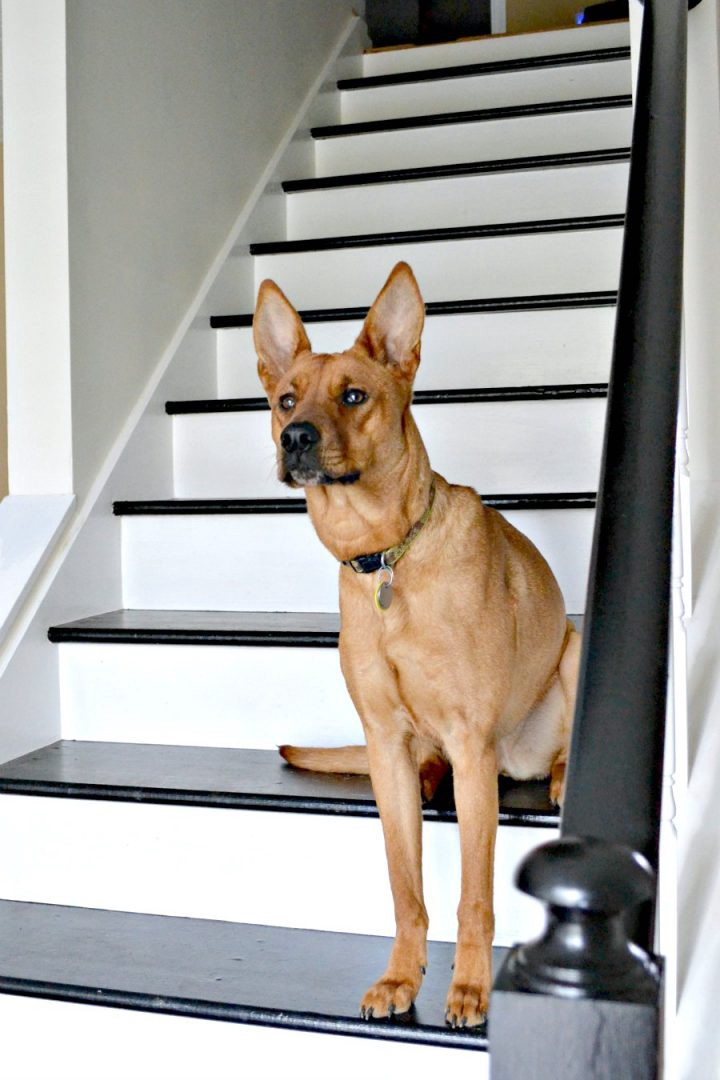 dog on black and white painted staircase