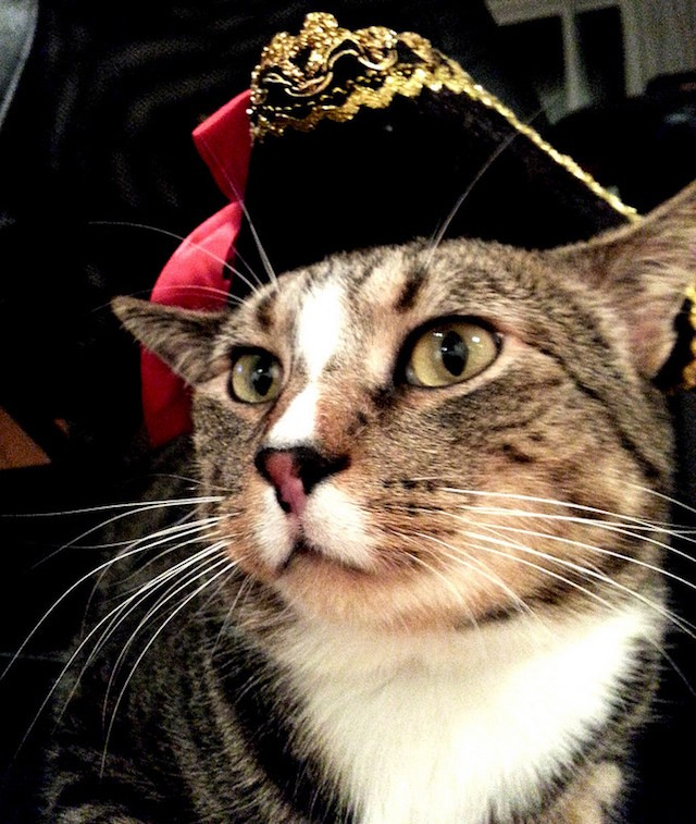 Cats With Hats Pirate