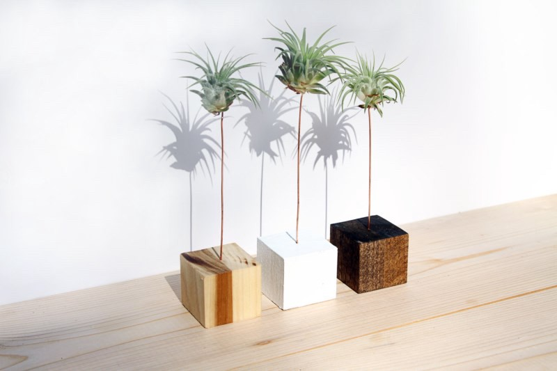 palm tree style air plant display