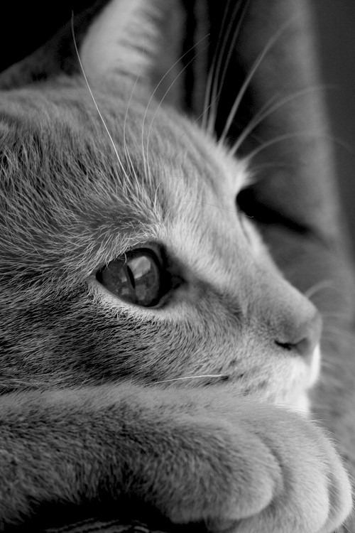 get closer to cats, cat profile in bw