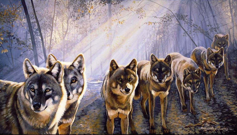 the strength of the wolf is the pack the strength of the damn pack is the damn wolf