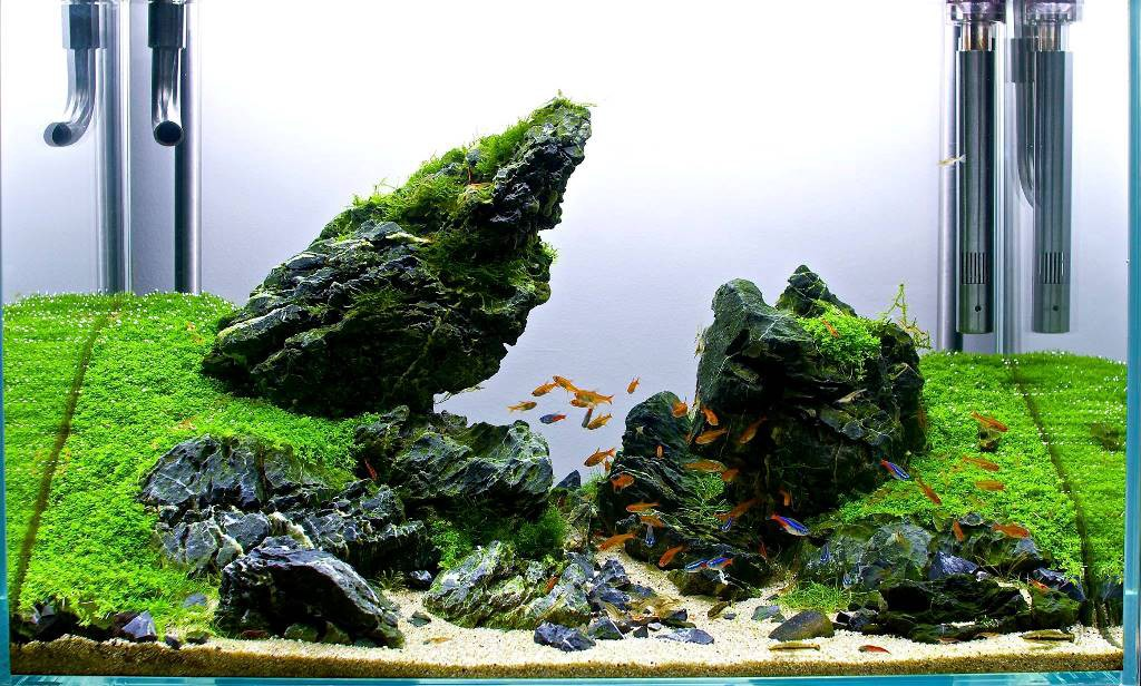 Can I use stones and driftwood in My Planted Aquascape?