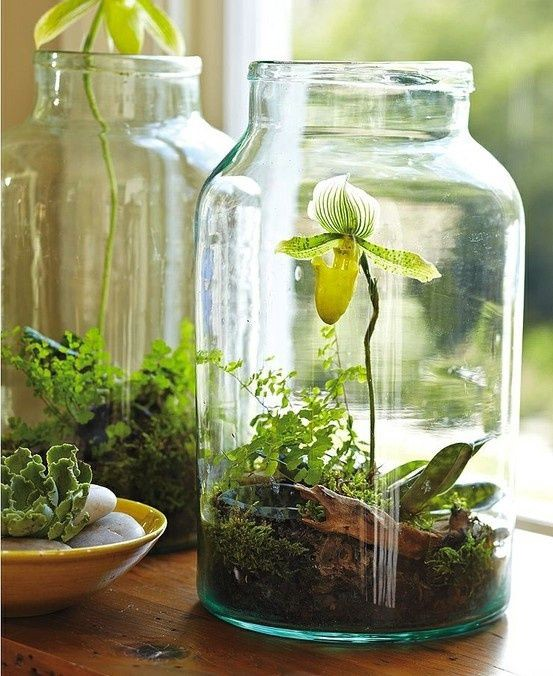Green Orchid in a glass jar