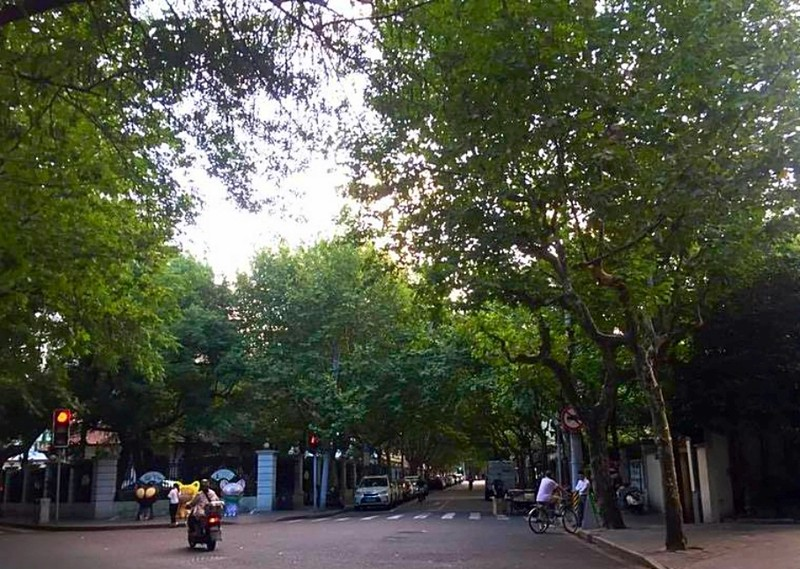 Wu-Kang Road is in Xuhui District, and this is where Fa Zu Jie is. The streets here are all covered with London plane trees.