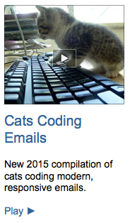 Cats Coding Emails Video