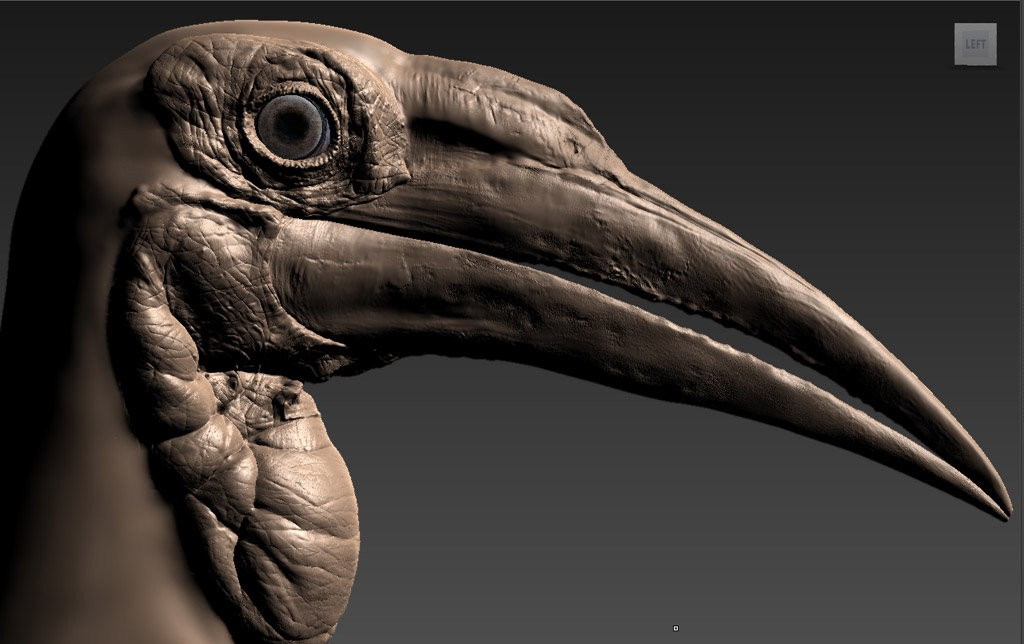 "Photorealistic 3D model of ""Southern Ground Hornbill"" by Léandre Hounnaké"