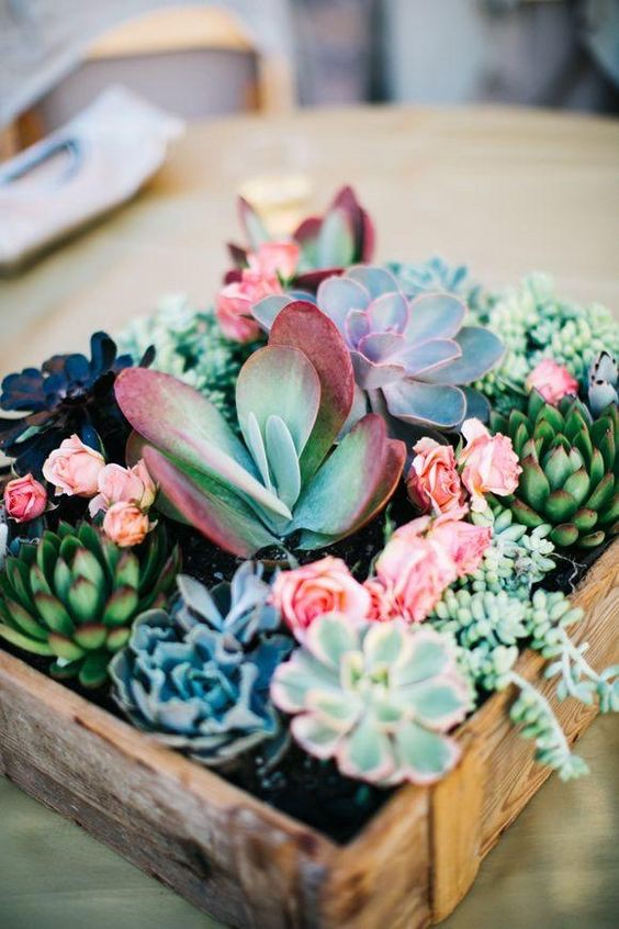 Succulents with a lot of colors