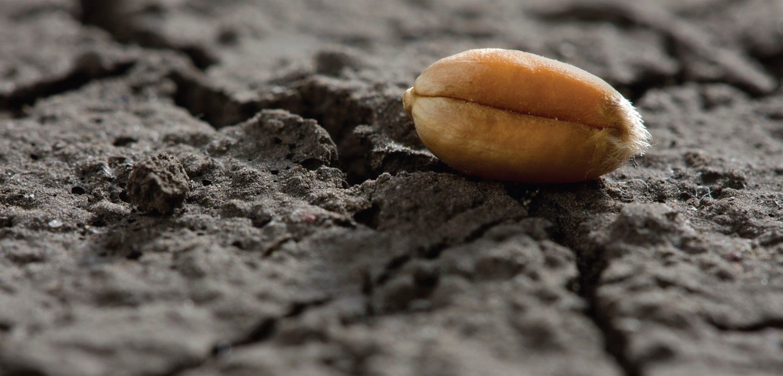 Cancer — The Seed and Soil