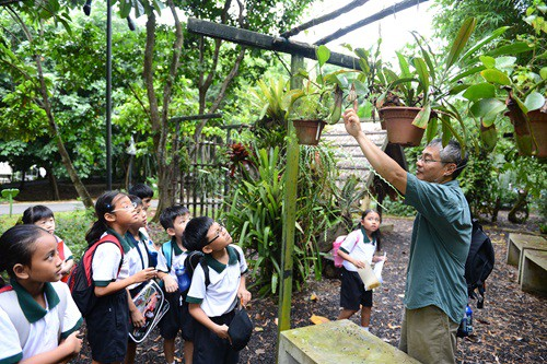 Seeing fascinating plants up close elementary in singapore