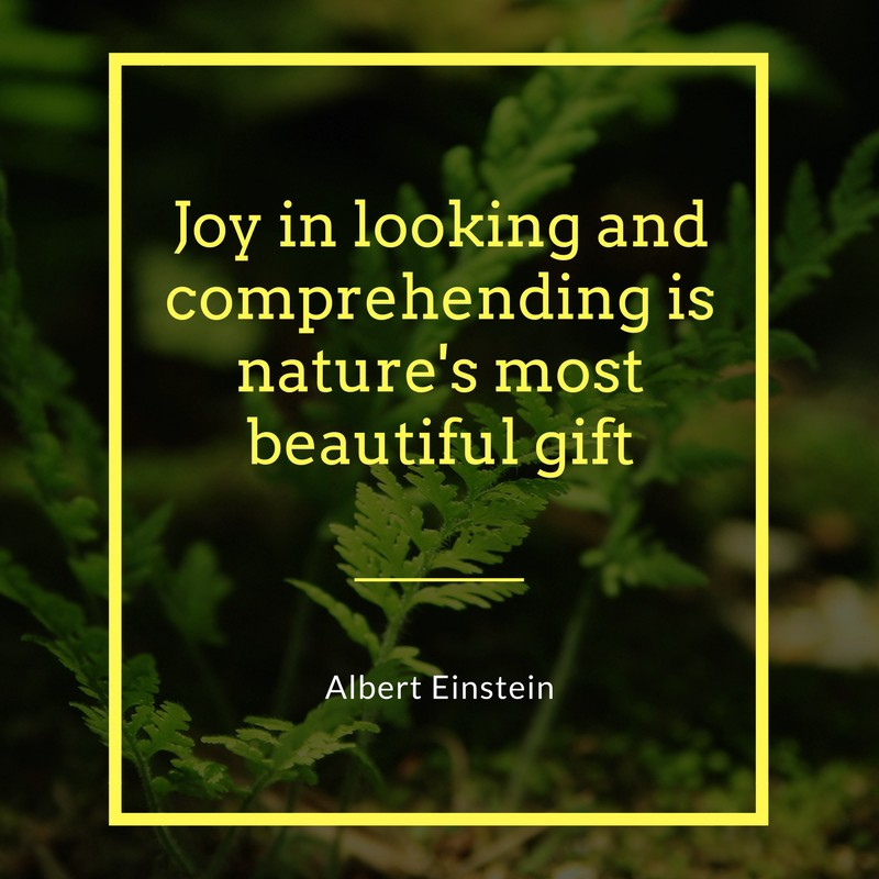 Beautiful Quotes On Nature Morning Sunset And Rain