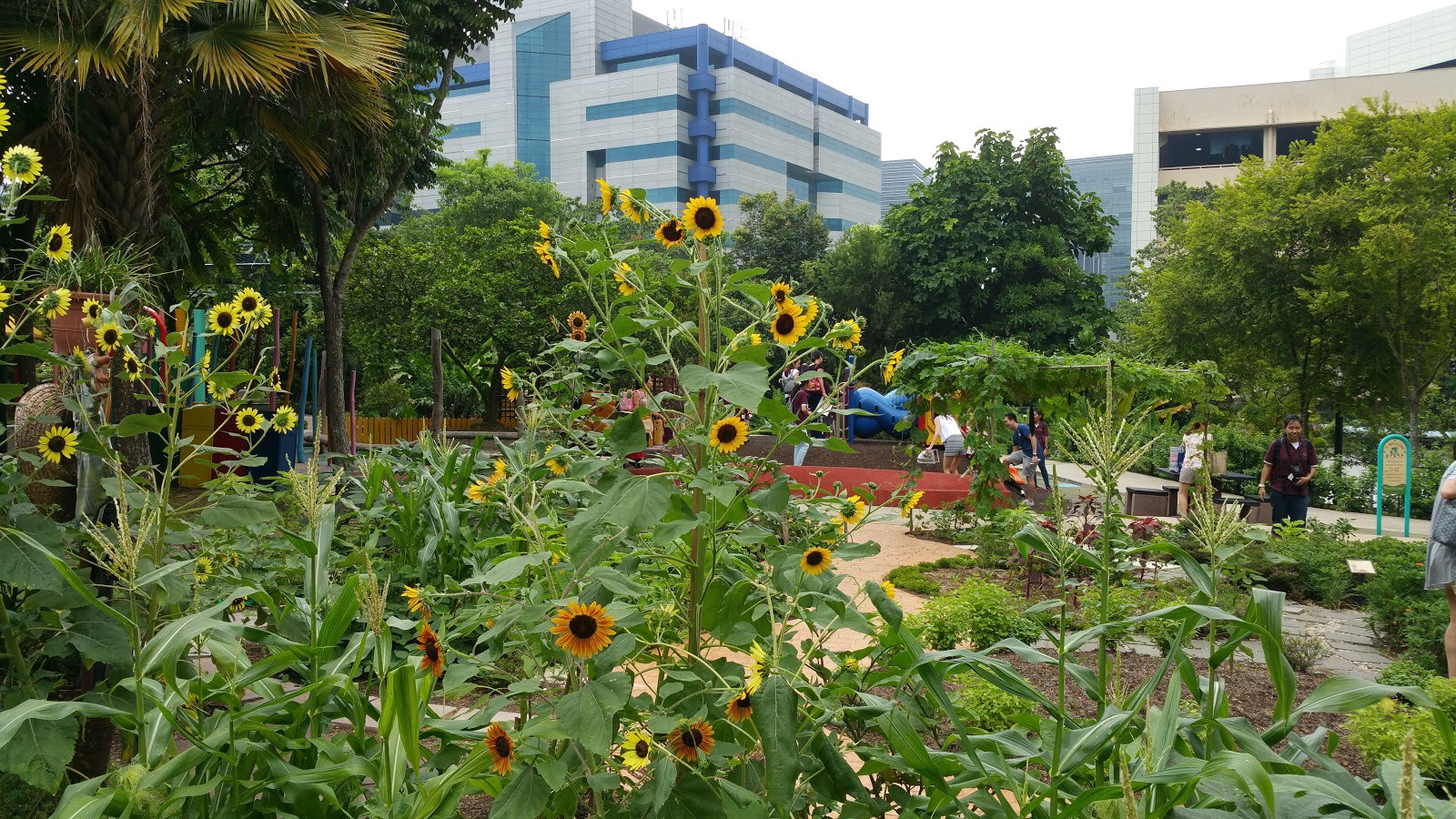 Transition from an unhappy world to a happy world e easy small i can see my office building behind the sun flowers izmirmasajfo