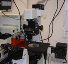 Tips for Peering into the Interior of Mice Using Intravital Microscopy