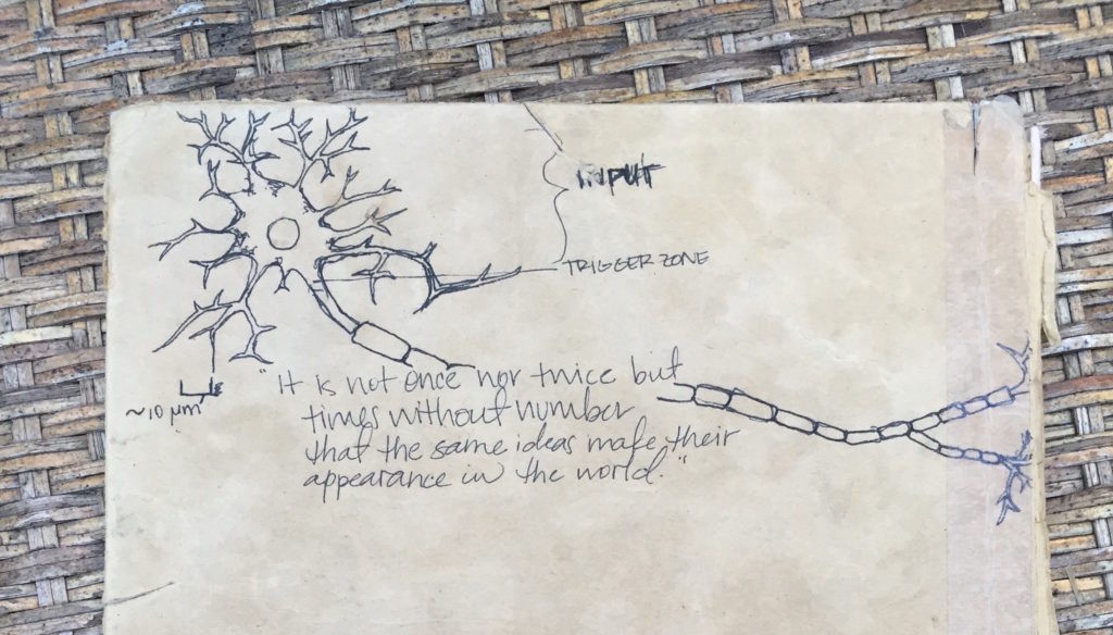 neuron drawing, aristotle quote