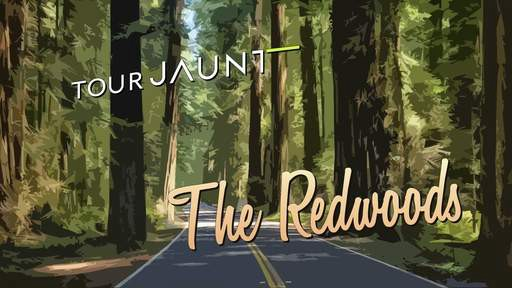 Tour California's great redwoods in #virtualreality: