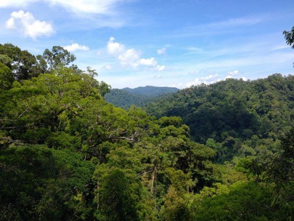 Brunei Ulu Temborong National Park by Mar Pages