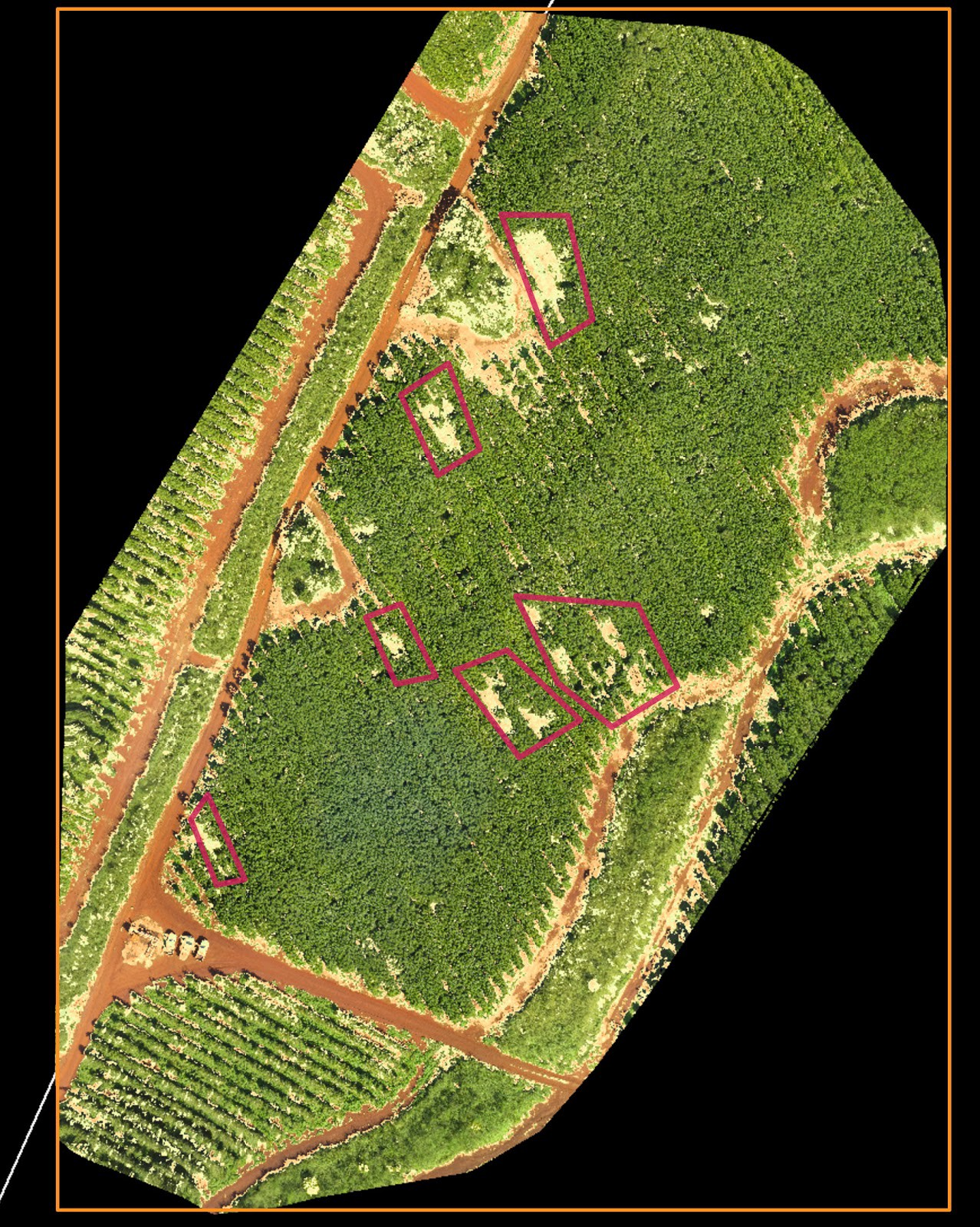 Drones Help Coffee Grower Evaluate Crop Health 85% Faster Than Manned Aircraft