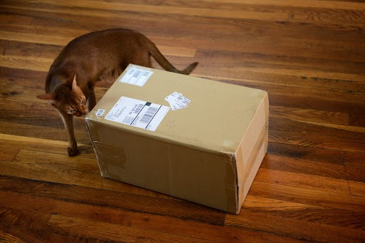 Abyssinian Johnny searches a box