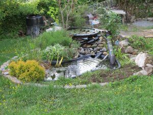 Frog pond in a home garden