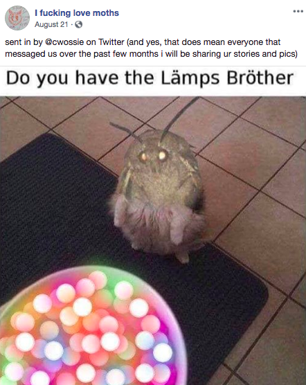Moth Memes Helped Me Conquer An Irrational Fear Of Moths