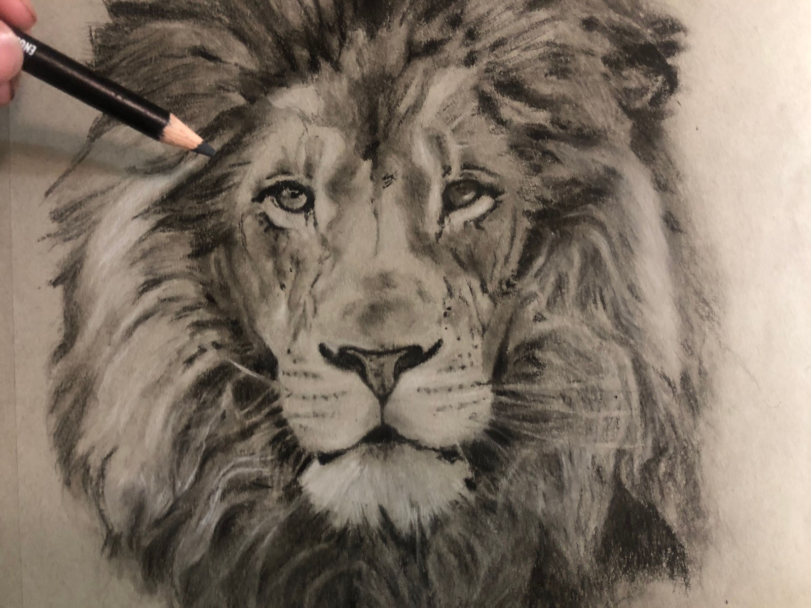 Drawing a lion realistic art with charcoal