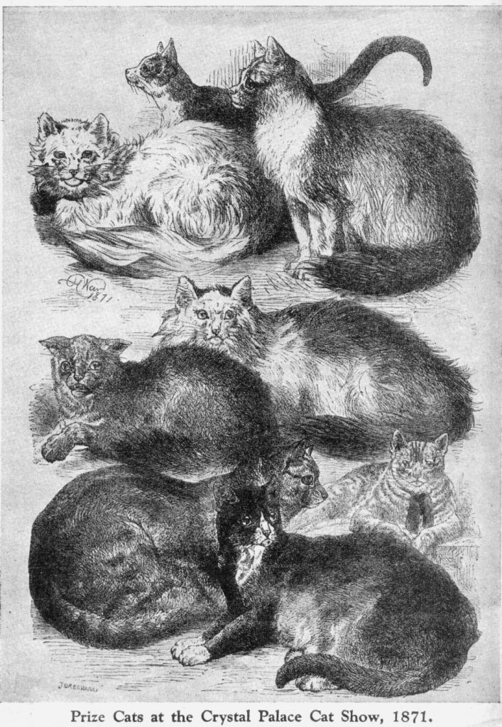 Prize Cats at the Crystal Palace Cat Show, 1871 (messybeast)