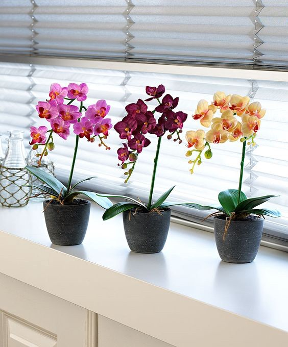 orchids in modern vases