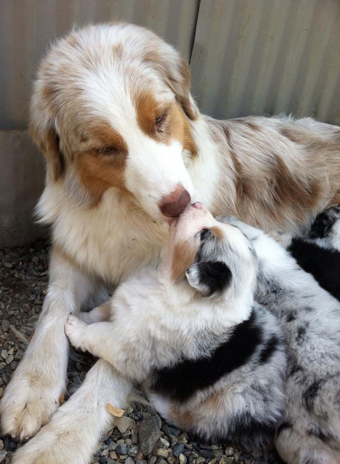 animals, dogs, cute, lovely, puppy, puppies, wow, photography, pics, awsome, little puppy, baby, animal baby, sweet