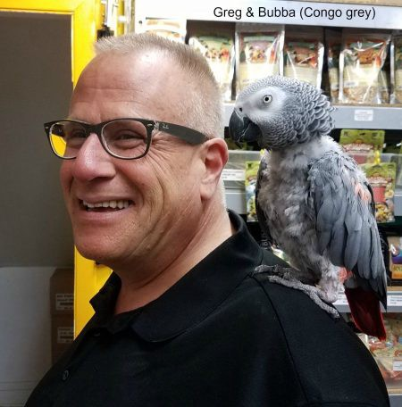 windy city parrot customer greg with african grey bubba