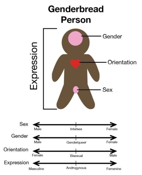changing trends in sexual orientation Start studying orgb4 - ch 2 the globalization of business and changing demographic trends ability, religion, personality, social status, and sexual orientation.
