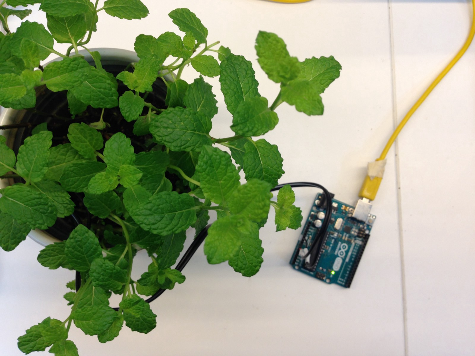 An Arduino Measures The Moisture Levels In Soil Of Mint Plant