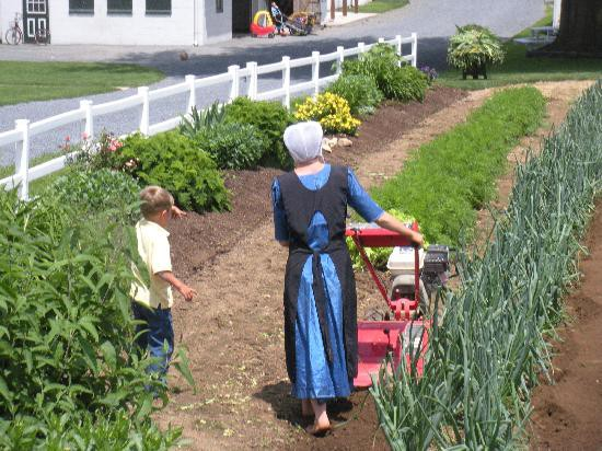 Image result for amish gardening