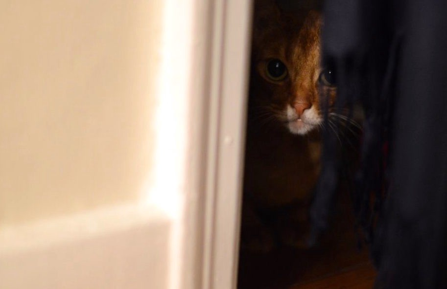 Abyssinian Johnny on the inside of the closet