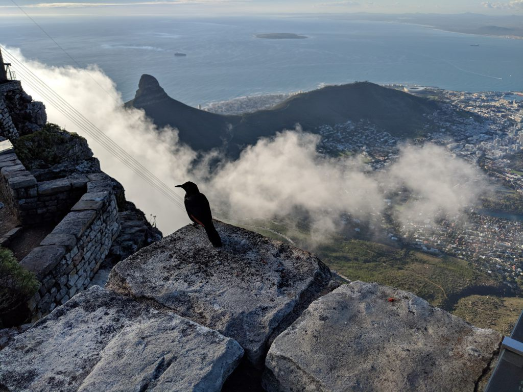 Scenic view from the top of Table Mountain
