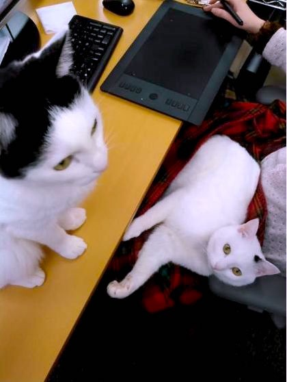 Cats at office