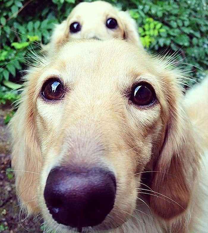 11 Pics Of Dogs With Their Cute Little Puppies Reckon Talk Medium