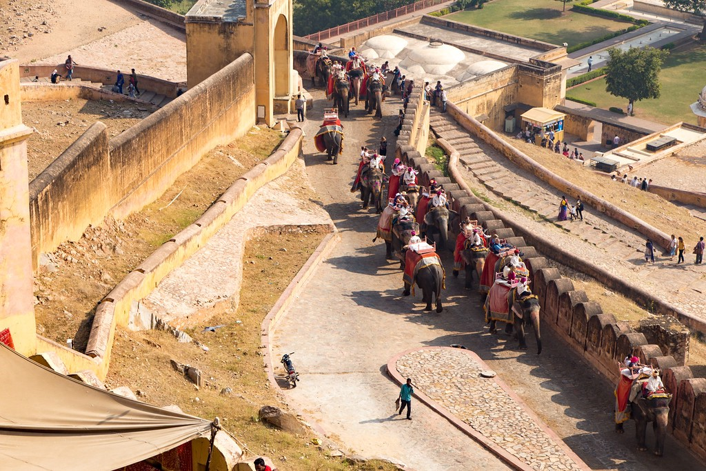 Elephants Take Tourists to the Top of the Amber Fort