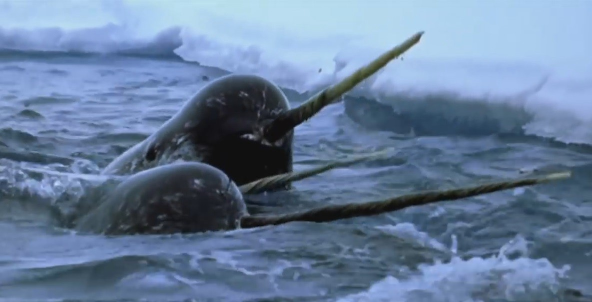 forget unicorns it s all about the narwhal lightspeed venture