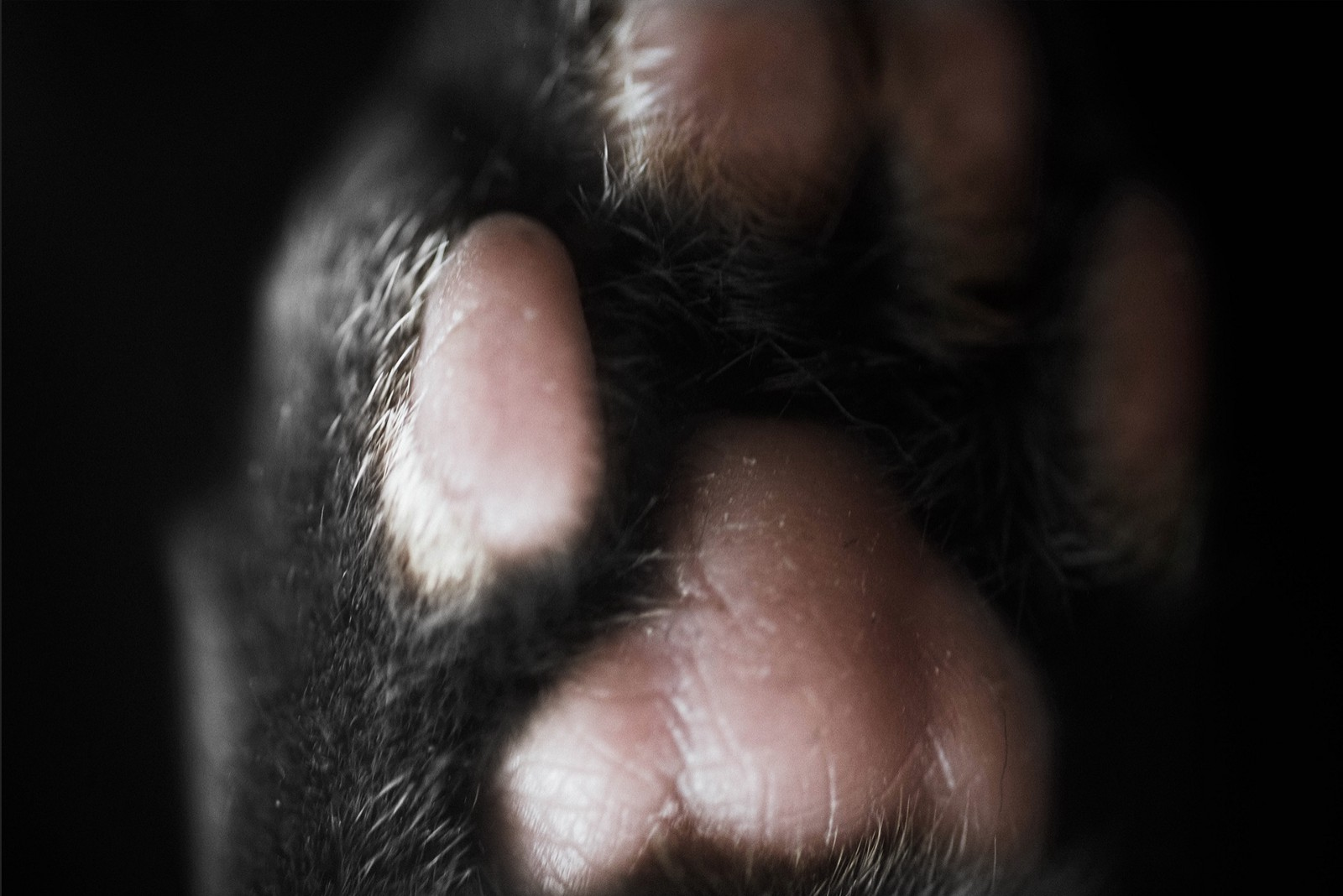 Cat Paw Secrets: Johnny\'s Anatomy #3 — Johnny Times