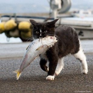 A cat with a fish