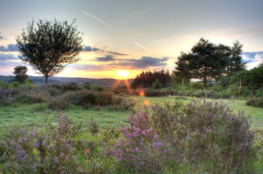 New Forest england photo